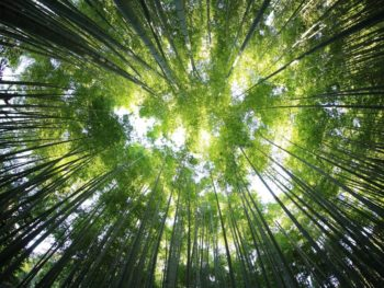 Forest Bathing – What is it, and where can you do it?